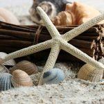 étoile de mer à la plage