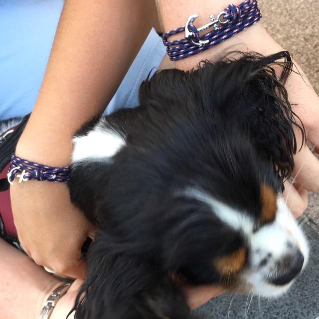 chien et bijou breton