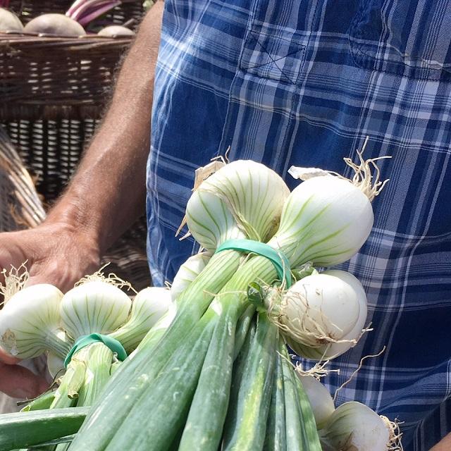 légumes bretons