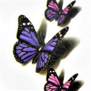 papillons de pourpre