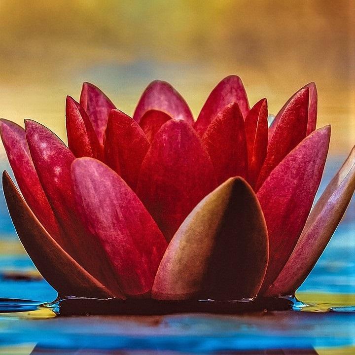 couleur rouge de chakra et bonheur
