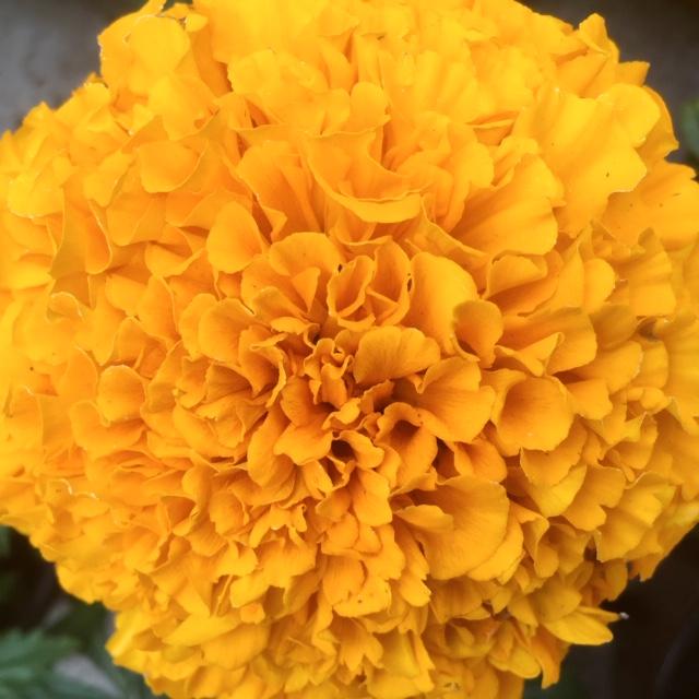 joli fleur du mois de mai à dinard