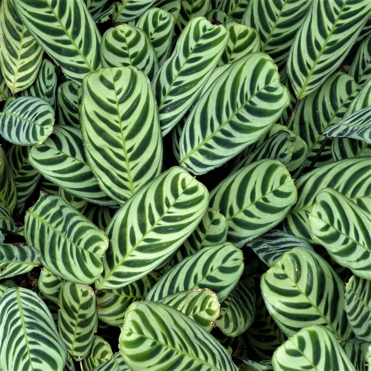 Amazonie aux couleurs de vert profond
