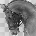 cheval et accessoires