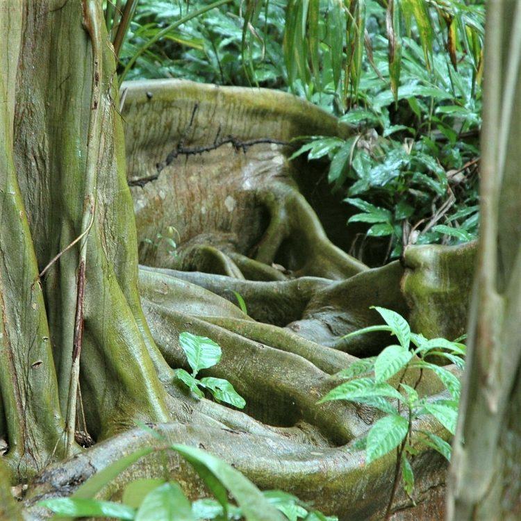 jungle de belize