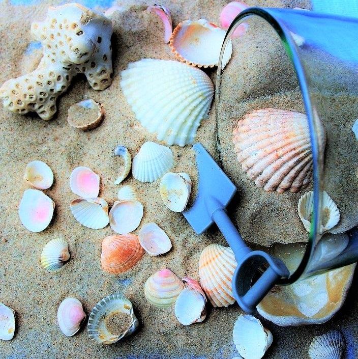 coquillage aux maldives
