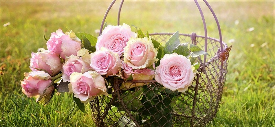 Mélodie de fleurs